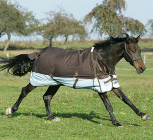 How to fit a horse blanket